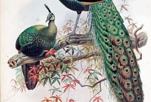 Peacocks are alchemical