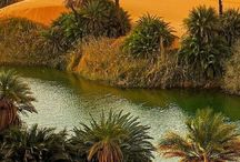 Desert - Sahara