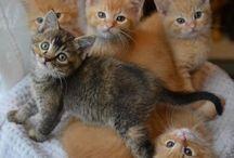 5 kucing