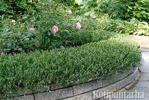 Rajaukset ja reunukset / Huoliteltu ilme syntyy puutarhaan pienistä yksityiskohdista. Yksi tärkeimmistä on tilojen ja pintojen rajaukset.