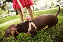 Pets in Weddings / Guests and attendants of the four-legged variety.