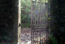 Jungle images