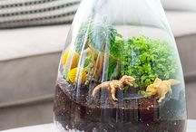 Terraniums / by Laura Grantham