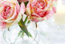 Botanic Beauty / by Caroline Norris