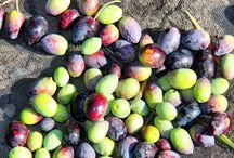Nuestros olivares de Jaén / Olivares donde se cultiva la gama picual, en Jaén.