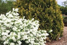 Spring Garden Plants / The best of the best for spring-blooming plants from First Editions®. Fill your garden with early-season color and start your spring with a smile.