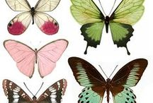 borboletas ...