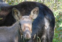 Wildlife from the Ranch / by Moose Creek Ranch