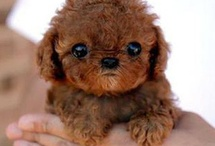 Cute little Dogs I wish I Could have =(