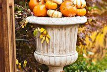 Fall/Pumpkins!  / by Sarah Bergeson