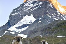 My Switzerland / Beautiful places to visit