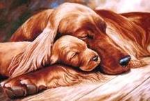 dogs xx