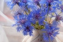 Картина (цветы)