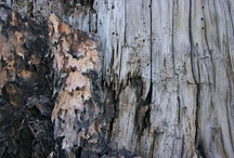 Natural Textures / Mother nature knows best.