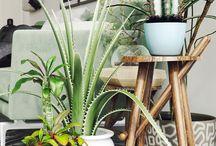# Plantes