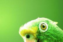 Värikkäät linnut