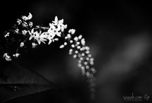 Saeahlee Photography - Flowers / 0