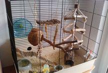 pet mouse ideas