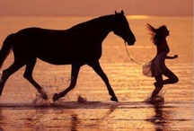 Horses: it's a passion / All about horses / by Toniesha S