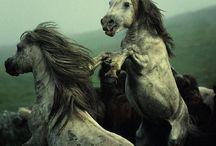 Horses For Morgan / by Kathleen Easton