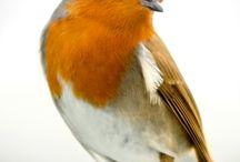 kızıl / kızıl gerdan
