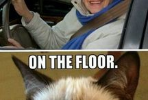 - Grumpy Cat -