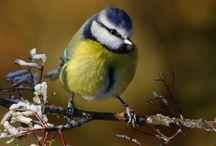 Téli madarak