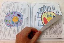 5th Grade- Life Science