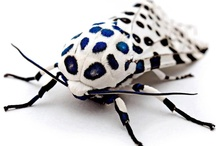 Insects & Bugs