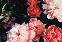 Flower Power / Flowers always make happier.