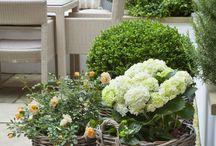 Květinové truhliky a výsadba