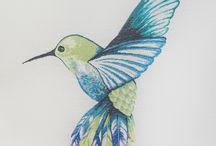 colibrí 1