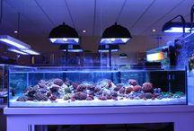 Aquarium  Rimless