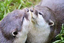Otters / Otters