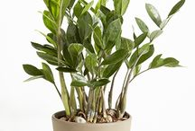 Houseplants / Plants for indoors