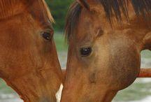us equine rescue league