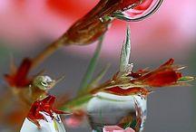 Wonderful dew drops