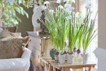 Paper Whites home styling