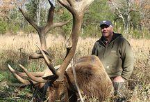Elk Harvest: 2012