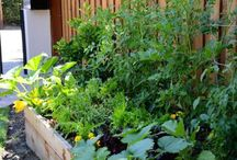 Backyard and Gardening