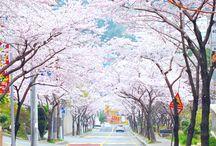 Street(?)