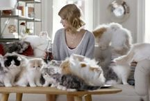 Relive the Bonding with your Felines