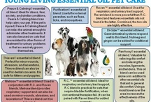 Young living oils / by Heather Jorstad
