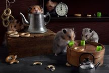 "Model & Star Hamsters by Elena Eremina / A talented Russian photographer Elena Eremina created its interesting project called ""Still Life with hamsters,"" in which the main stars are cute rodents. Take a look at amazing series ""Still life with Hamsters"" and enjoy."