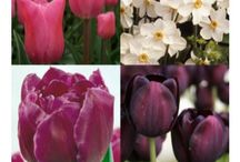 The Cottage Garden / Ideas, plants and plans to do with the cottage garden