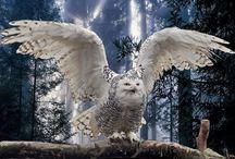 owl / owls world