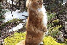 Macskák - Cats