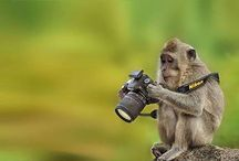 5 Tips for Animal Photography (3 min Reading)