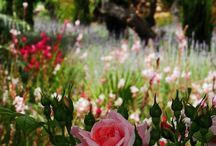 Scented and aromatic gardens / Gardens to fulfill the senses