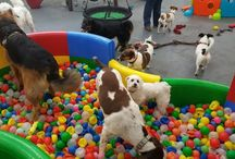 canine leisure centre